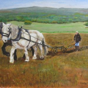 Ploughing with horses traditionally at Singleton