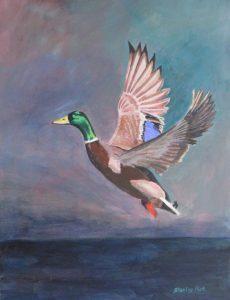 Painting of Mallard Duck in Flight