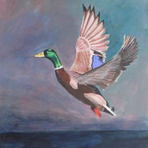 Mallard Duck painting showing takeoff
