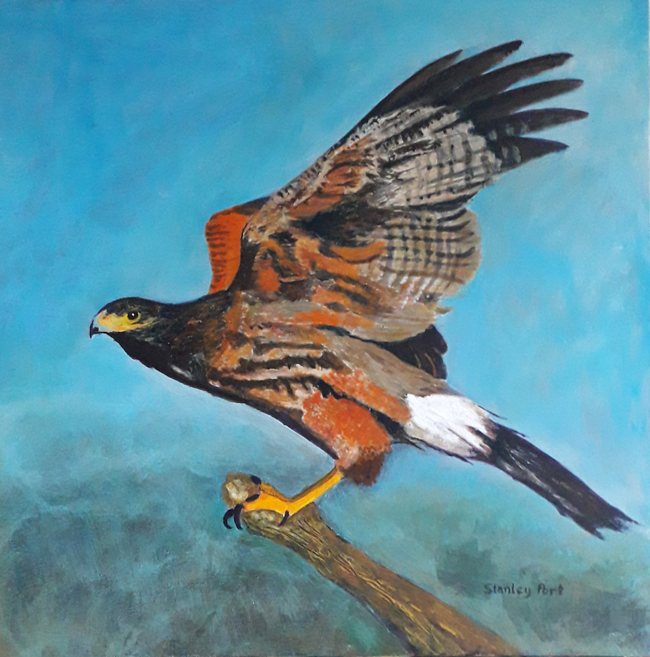 Painting of a Harris Hawk