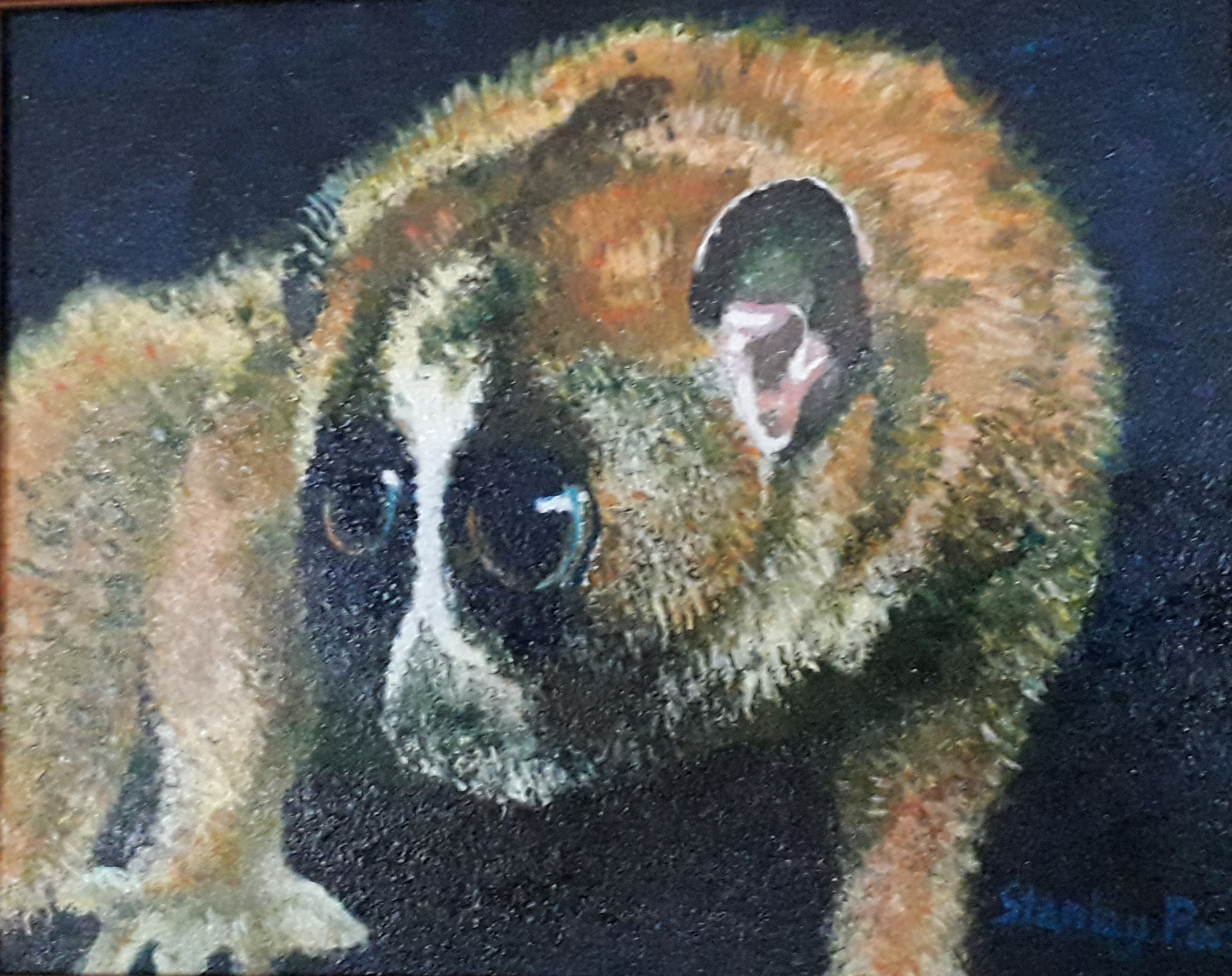 Slow Loris painting